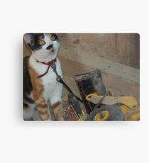 playing in the sandpit Metal Print