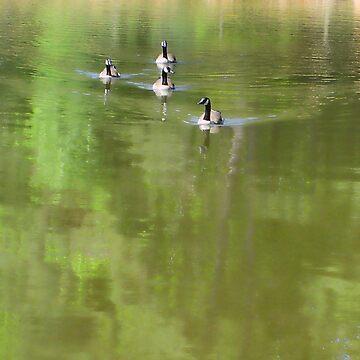 Clemson Geese II by Artlife