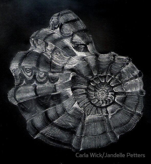 Shell Study For My Mom by Carla Wick/Jandelle Petters