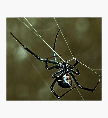 Green Haze  ( Black Widow Series ) Photographic Print