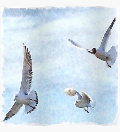 Three Seagulls Watercolor Poster