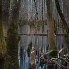 A Touch of Color – Congaree National Park, South Carolina by Jason Heritage