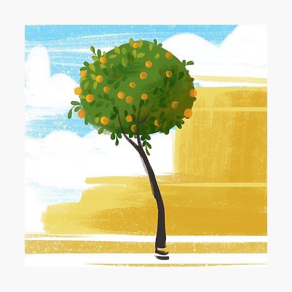 Seville Orange Tree Photographic Print