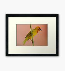 Golden Palm Weaver 1 Framed Print
