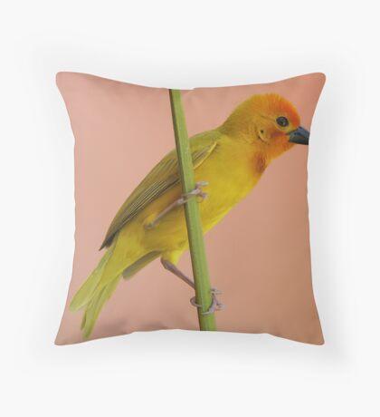 Golden Palm Weaver 1 Throw Pillow