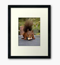 Red Squirrel 2 Framed Print