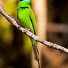 Bee-eater at rest by Pravine Chester
