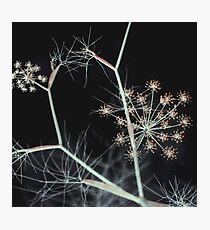 Night Whispers. Dark Floral Photographic Print