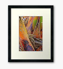 Palm Bark in Living Color Framed Print