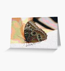 Butterfly Oil Pastel Greeting Card
