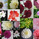Collage of Flowers by pat oubridge