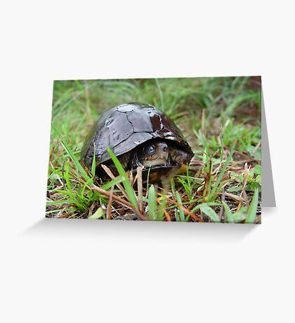 Box turtle in the rain Greeting Card