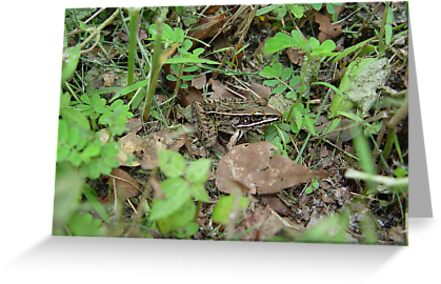 Southern Leopard Frog by May Lattanzio