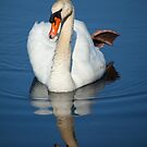 Swans Reflection In The Water by Karol Livote