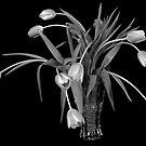 Tulip Still by J. Scott Coile