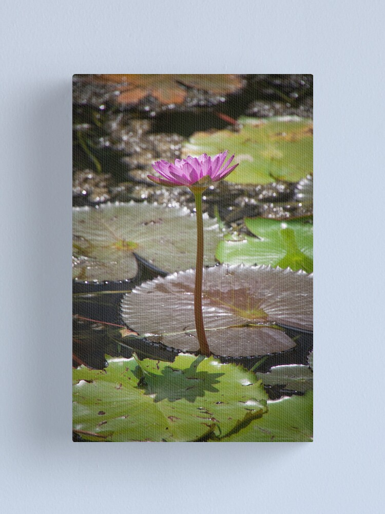 Alternate view of Water Lilly Canvas Print