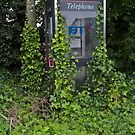 Ivy-covered Phonebox by Malcolm Kirk