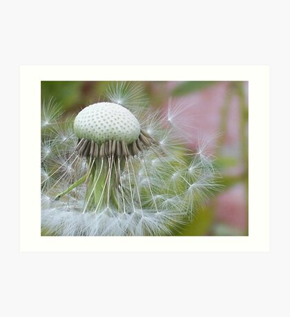 Windblown Dandelion   Art Print