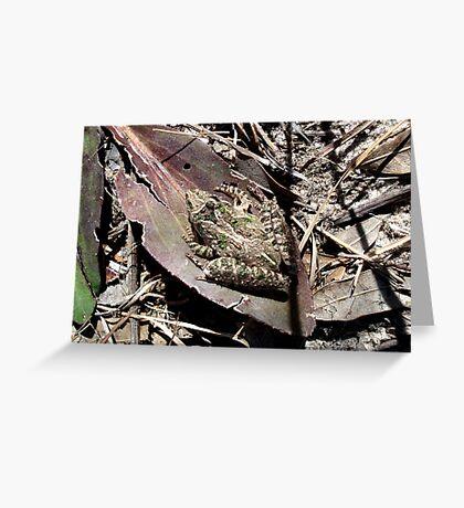 Cricket Frog Greeting Card
