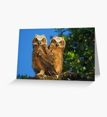 Creatures of the Wood Greeting Card