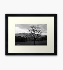 The Tree in the Field at Cades Cove Framed Print
