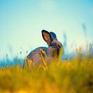Grass Fed Bunny by ShotsOfLove