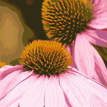 Coneflowers  by pennywm782