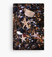 Beached Starfish  Canvas Print