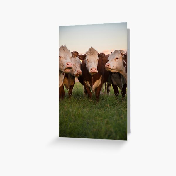 Cow Herd Greeting Card