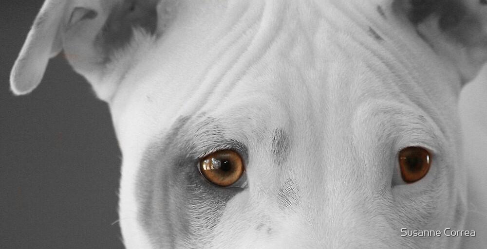 freckles the pit 2 by Susanne Correa