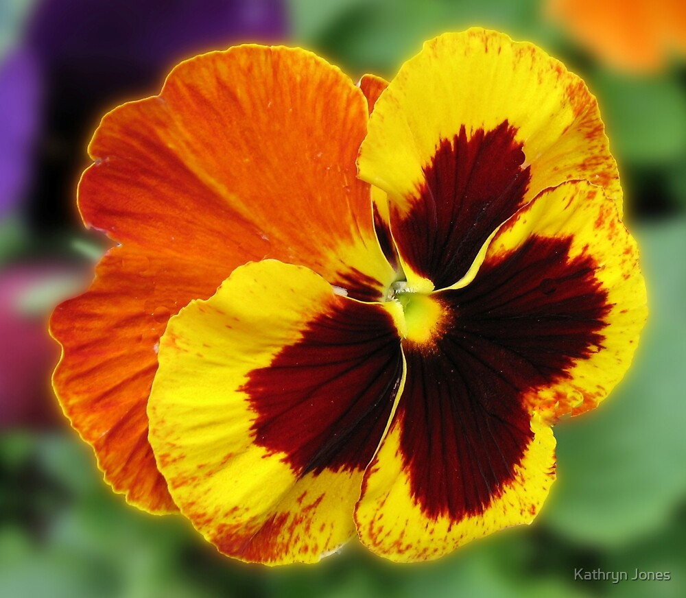 Amber and Gold Pansy Close-up by Kathryn Jones