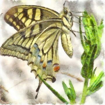 Butterfly Watercolor by taiche