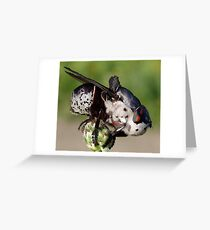 Botfly (Oestridae)  Greeting Card