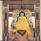 Buddha by Sunil Bhardwaj