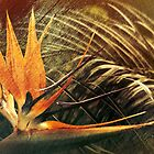 Bird of Paradise #2 by Elaine Teague