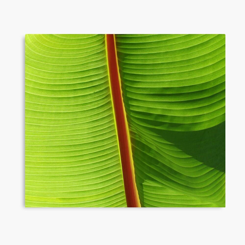 Banana Leaf. Leinwanddruck