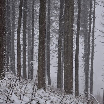 Flurry Trees by alisonchambers