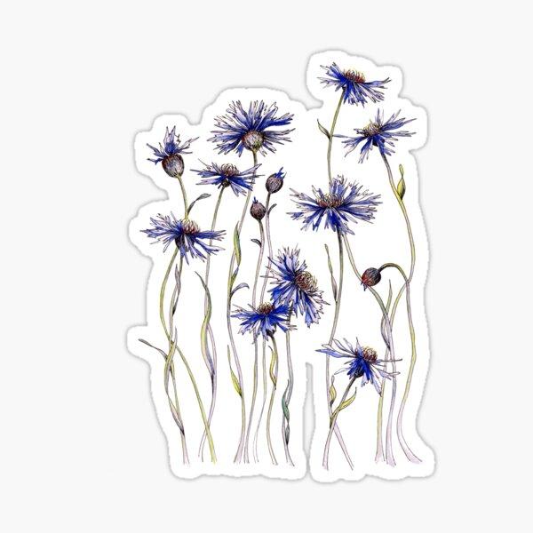 Blue Cornflowers  Sticker