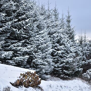 Sylvan Snowscape by alisonchambers