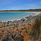 Dolphin Beach by FASImages