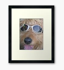 Doggles Framed Print