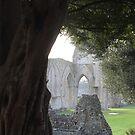 Spring in Glastonbury Abbey by MMCFraser