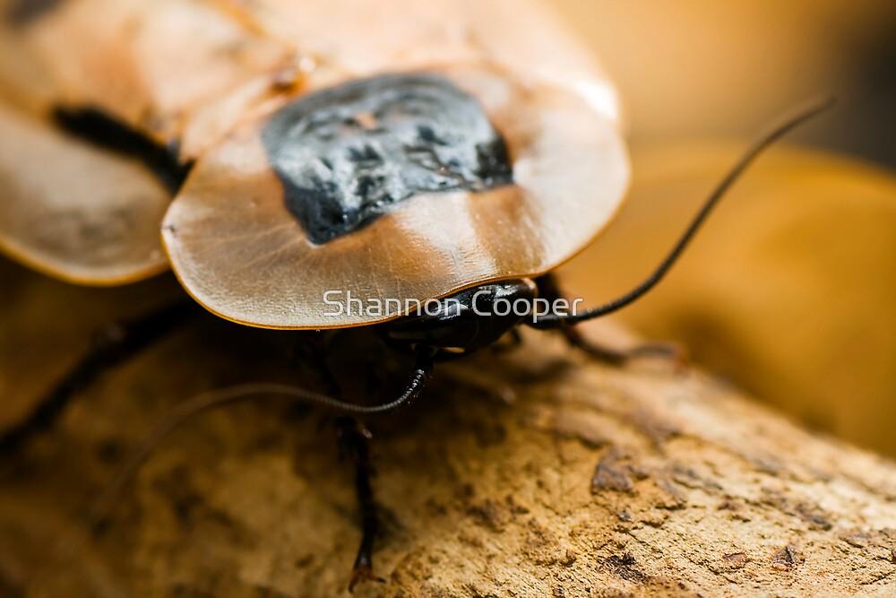 Brazilian Cockroach by Shannon Beauford