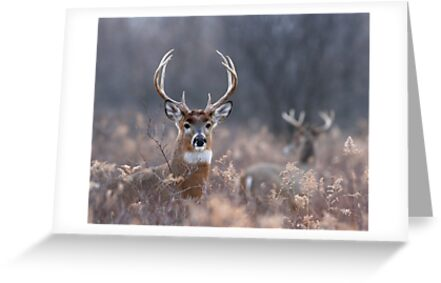 White-tailed Deer In The Brush by hard-rain