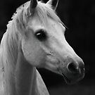 Arabian Mare by Sharon Morris