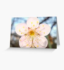 Pretty & Pink Greeting Card