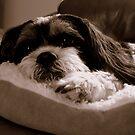 Having A Rest by Sprinkla