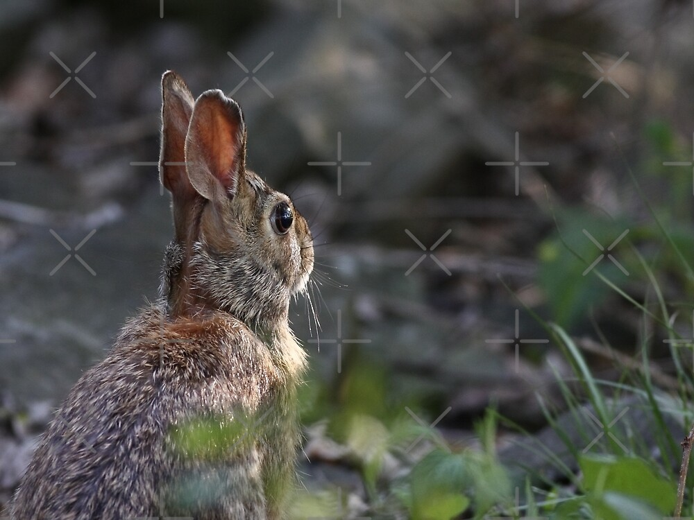 What may come of the day - Rabbit by Jim Cumming