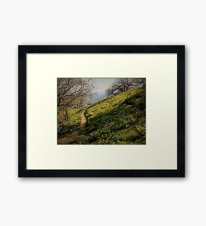 Path Through Yellow Daisies Framed Print