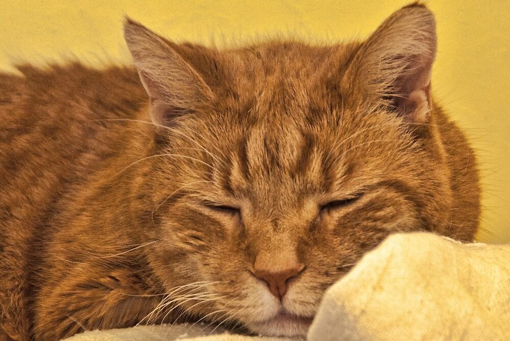 Cat Nap by Joy  Rector